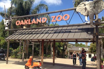 Scoot to the (Oakland) Zoo & Brunch in Alameda